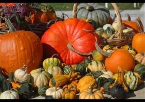 Medium harvest festival