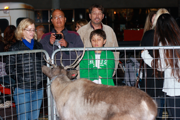 Young and old alike enjoyed seeing reindeer.