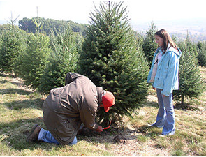 Photo courtesy of Kohls Stony Hill Tree Farm