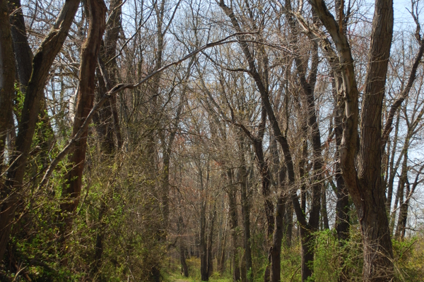 The abandoned Springlawn Road is the main trail at Springlawn Preserve.