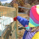 Photos by Richard L. GawClasses give children the opportunity to learn about farm animals, first-hand.