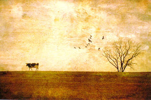 'Last Cow Home' by Anita Bower.
