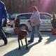 Salinger, a three-legged dog, playfully makes his way into Animal Friends.