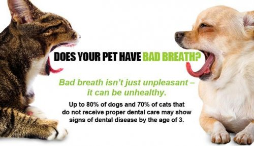 Cat dog bad breath