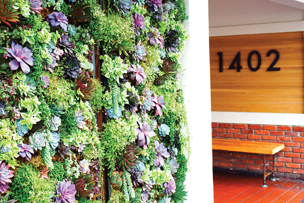 Stroll past the carefully crafted wall of succulents on your way to the entrance.