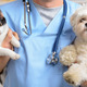 Pets Now Benefiting from to Treat Chronic Diseases - Mar 31 2015 0954AM