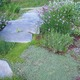 Creeping Thyme, Lavender, Chives, Sage, and Dianthus