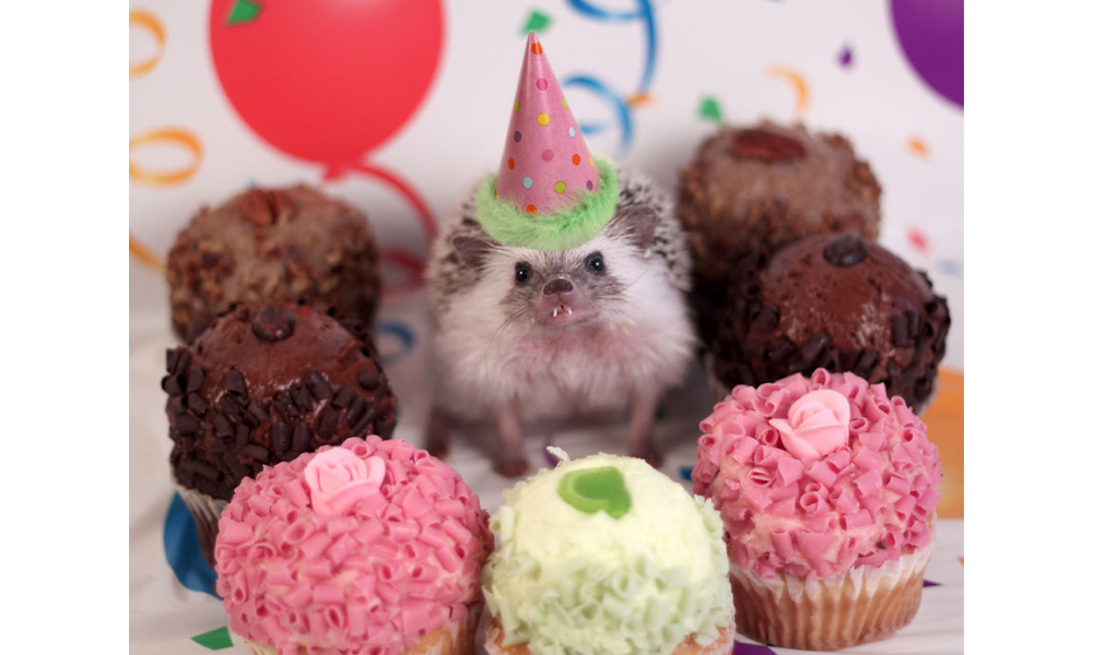 Am 20hedgie 20in 20birthday 20hat