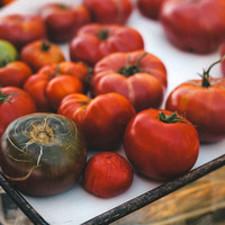 Medium me crop s2 tomatoes 1 1