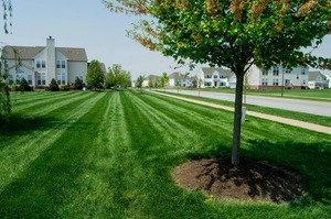 Medium grass 5