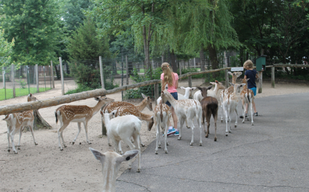 Herding at Deer Park
