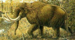 Medium mastodon