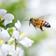 Create a Pollinator Habitat to Attract Birds and Bees - Aug 31 2015 1136AM