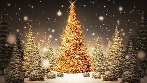 Medium glowing christmas trees fullhdwpp.com 1