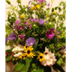 Farmstand 20flowers 202a 20cropped