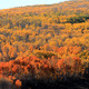 Exceeding the normal beautiful yellow hues, oranges and reds dominated the landscape in fall of 2012. Photo By Nate Brothers