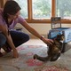 Penny the cat seems to appreciate scratches from Stephanie Smerdon during her visit.