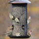 Stokes Select Giant Combo Bird Feeder $44.99 at PetCo, 855 East Bidwell Street, Folsom. 916-984-6141, petco.com