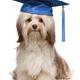 Puppy Training $99-$600 at Folsom Dog Resort, Blue Ravine Road, Folsom. 916-439-7202, folsomdogresort.com