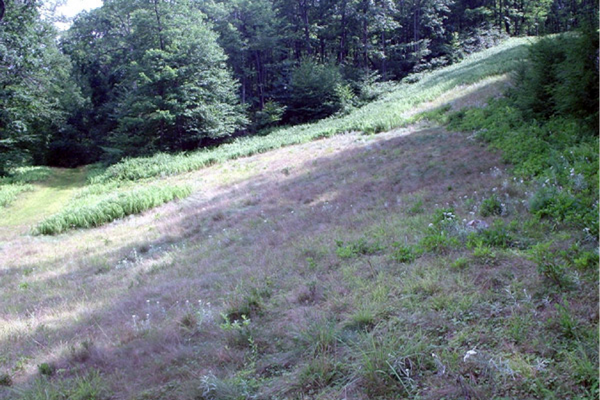 "Base of the trails on skier's right of the poma lift. ""The slope seen here ran top to bottom and had a real nice pitch (possibly advanced),"" Kevin writes. ""On this trail, like the others, there is very little regrowth. There is an opening in the treeline across the slope which is the point where the narrower round-about trail came out. That trail would not have been more than two groomer widths wide, I would guess."" Photo provided by Kevin Whipple."