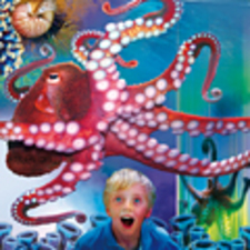 Octopus Hideout Exhibit Opens - start Mar 14 2016 1000AM