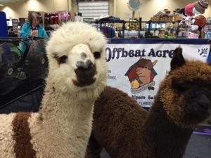 Medium alpaca 20fest