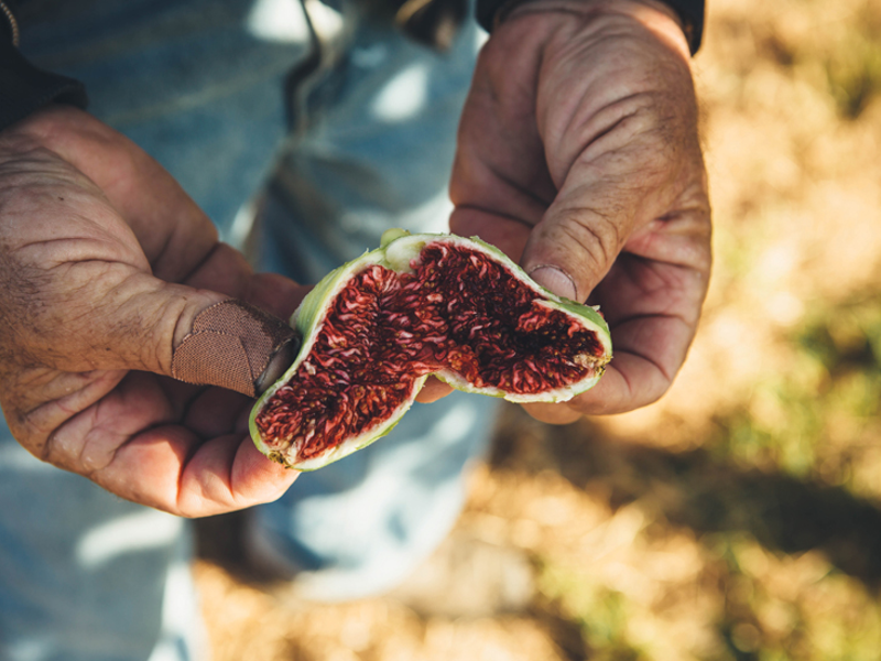 The Steinachers Rise to the Top with Maywood Farms Figs