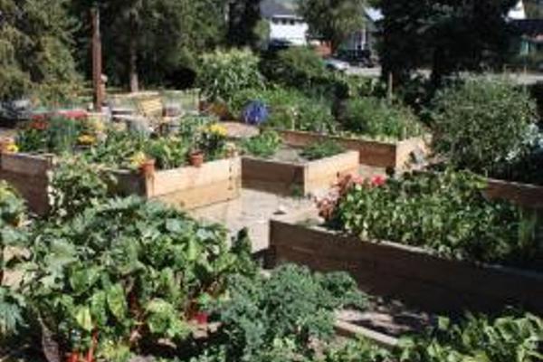 Growing gardens, gathering veggies and community momentum ...