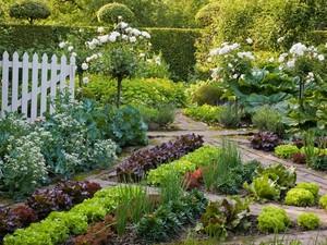 Medium edible garden