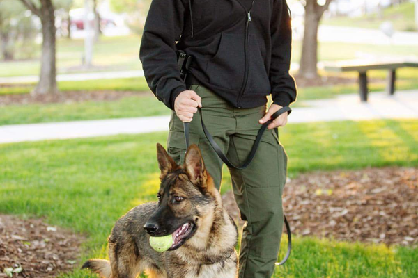 Sandy City Officer Kaley Erickson with K-9 Bronx (Sarah Knight Photography via Sandy City Police)