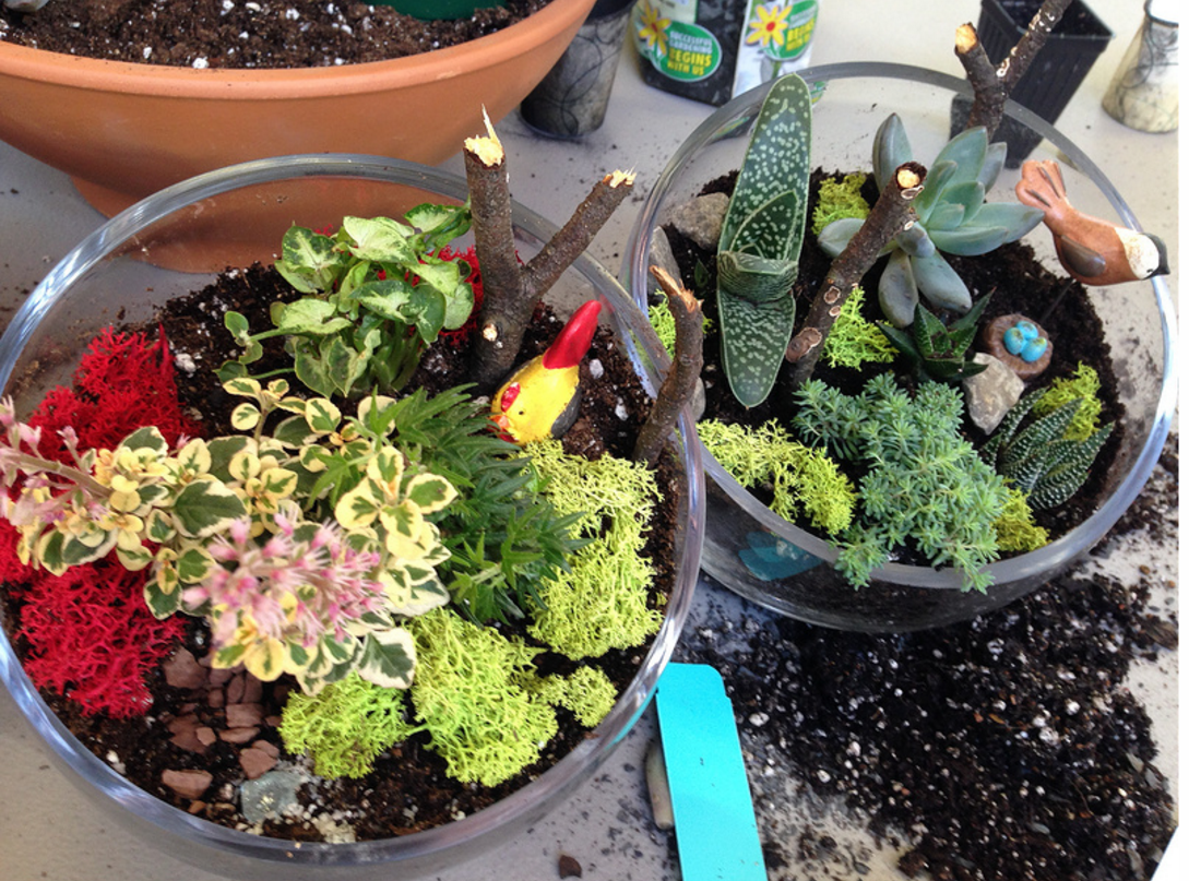 Build Your Own Terrarium At Linvilla Orchards
