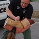Draper police will demonstrate a practice K9 suspect apprehension at the neighborhood watch event on June 17. Photo Linnea Lundgren