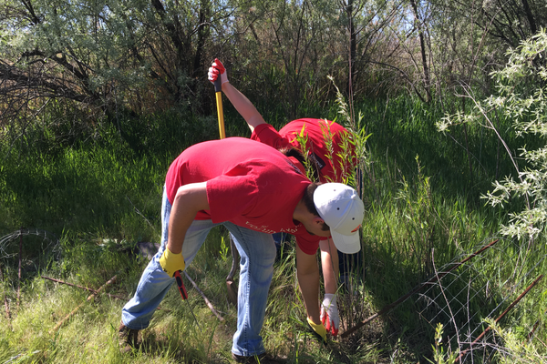 Two volunteers clear weeds from the grounds surrounding the Jordan River and its parkway in South Jordan –Tori La Rue