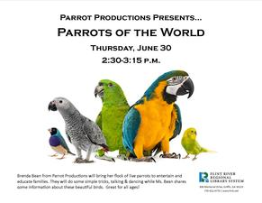 Medium parrot 20pro
