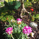 Airplanes and Fairy Gardens Seeing Things from a Different Perspective - Jun 30 2016 0856AM