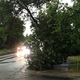 Tree damage near 86th Avenue in Maple Grove following July 5, 2016 storm. (photo by Doug Erlien)