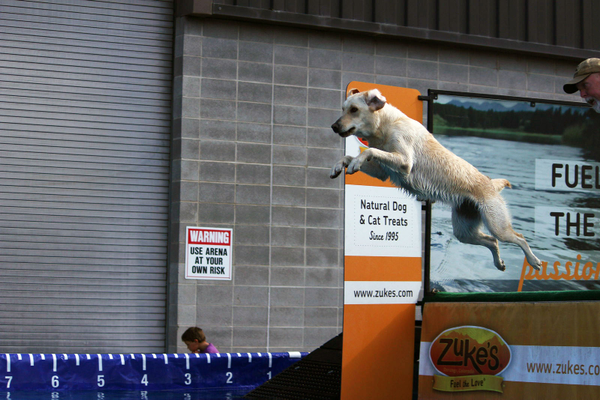 A dog leaps from a dock during the Tattle Tails Dogfest at the Golden Spike Event Center on May 21 and 22. The Dogfest included a DockDogs, a traveling dog sport competition. – Cassie Swift