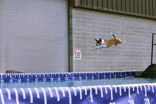 A dog soars through the air head towards a pool during Odgen's first DockDogs competition. DockDogs, a competitive sport for dogs, was supposed to be held in West Valley at the end of May, but when the even fell through, dog trainer Cassie Swift pulled another Utah DockDogs competition together in Ogden, so the owners and dogs would still be able to compete. – Cassie Swift