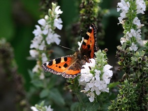 3 Simple Ways to Attract Butterflies to Your Garden - Jul 25 2016 0147PM