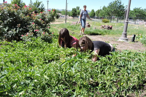 Students manage the garden at the Jordan Academy for Technology and Careers South Campus to earn school credit. –Jordan School District