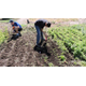 For the second year, the garden and greenhouse at the Jordan Academy for Technology and Careers South Campus provided students a way to pursue agricultural study during the summer break. –Jordan School District.