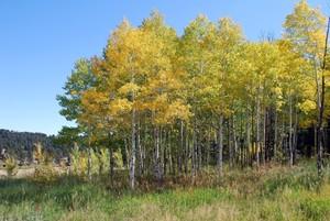 Medium fall 20colors