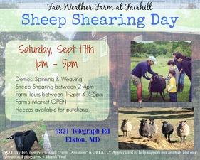 Medium sheep 20shearing 20day