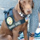 A search dog observes the city's 9/11 ceremony
