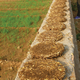 Cow dung, mixed with straw, is used for fuel.
