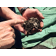 Home 20composting 20techniques 20 1
