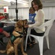 Cynde Howells enjoys her food with puppy-in-training, Noodle, at the Wasatch Cooperative Market drive on Sept. 16. (Travis Barton/City Journals)