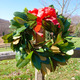 Thumb magnolia 20wreath 20 1  20medium