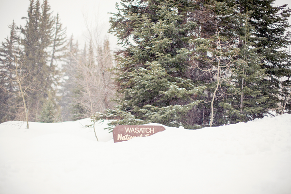 The Wasatch National Forest sign buried by recent snowfall, outside Donut Falls trailhead/ Quirky Shutter Photography