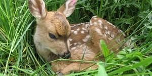 Medium mule deer 640x320